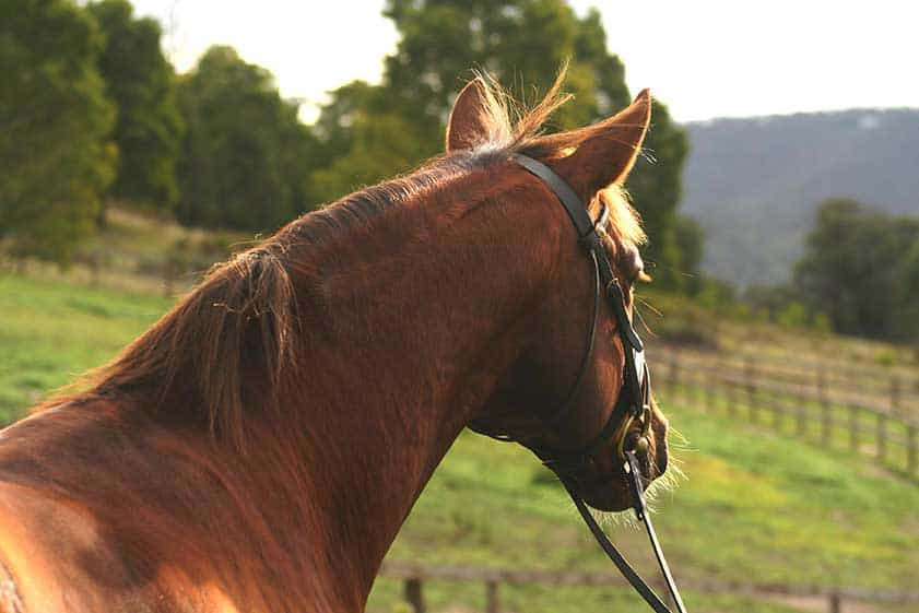 Home | Equine Distance Learning